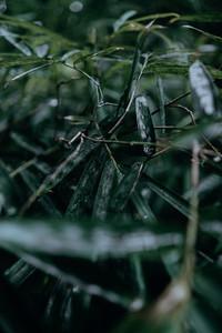Natural Textures 1