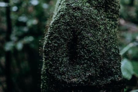 Natural Textures 3
