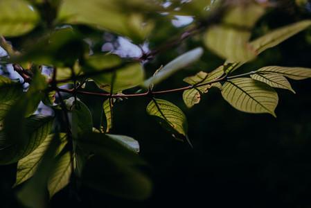 Natural Textures 11