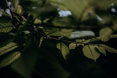 Natural Textures 10