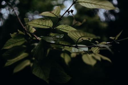 Natural Textures 9