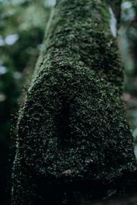 Natural Textures 4