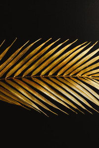 Dark and rich tropic minimalist creative photography of a golden palm leaf over a black canvas