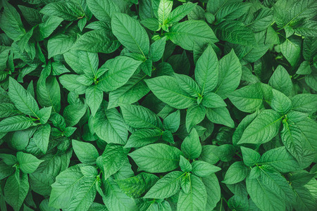 Moody macro nature photography  Green foliage full frame background
