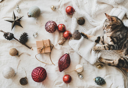 Christmas festive decoration toys and home tiger cat top view