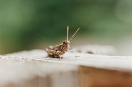 Hello There  Grasshopper