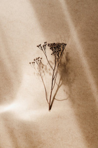 Abstract creative minimal composition with a dry grass over kraft paper