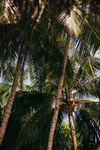 Dense tropical trees
