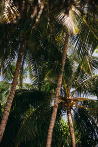 Dense tropical trees