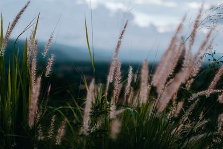 Natural Environments 1