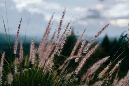 Natural Environments 3