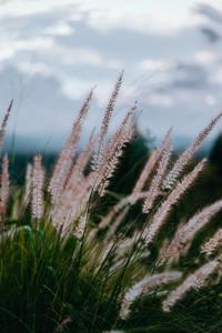 Natural Environments 4
