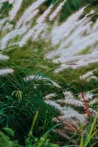 Natural Environments 5