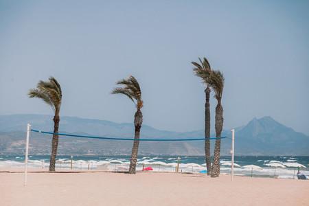 Palm trees on the empty beach at San Juan Alicante Spain