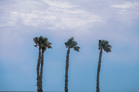 Palm trees on the empty beach at San Juan Alicante Spain