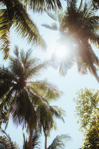 Coconut trees on a sunny day