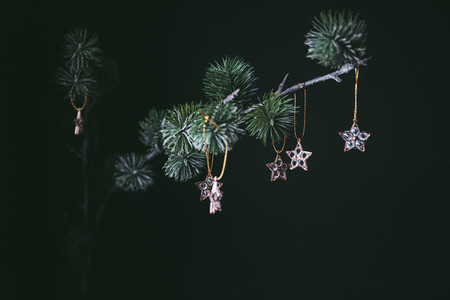 Golden mini stars Christmas decoration on a fir branch