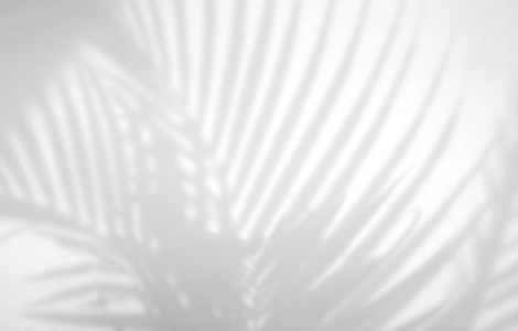Realistic and organic tropical leaves natural shadow overlay eff
