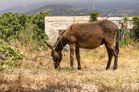 A donkey in a farmhouse