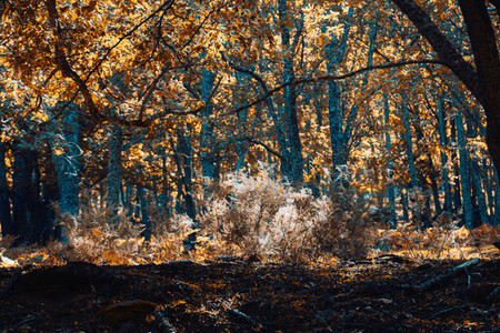Autumn chestnut forest in Spain with warm colors
