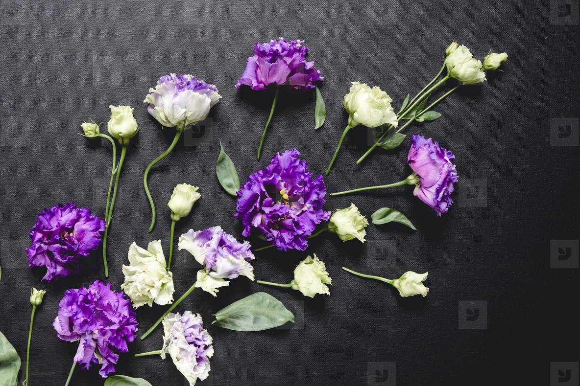 Flat lay composition with fresh purple and white flowers over a black canvas  Moody and dark creative photography