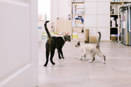 Cats walking in a veterinary clinic