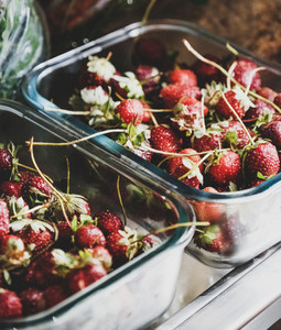 Fridge shelves loaded with fresh summer garden strawberries in containers