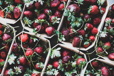 Fresh strawberries in boxes texture  background and wallpaper  close up