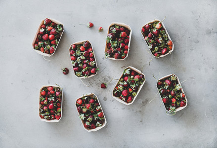 Fresh garden strawberries in eco friendly plastic free boxes over grey background