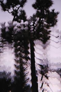 Multiple exposure silhouetted tree against purple sky