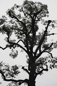 Silhouetted tree against overcast sky