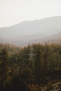 Electricity pylon among trees in forest Redding California USA