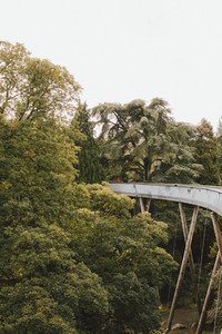 Elevated bridge among trees Westonbirt UK
