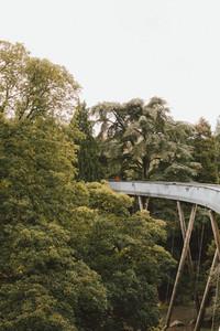 Elevated bridge among trees Westonbirt UK