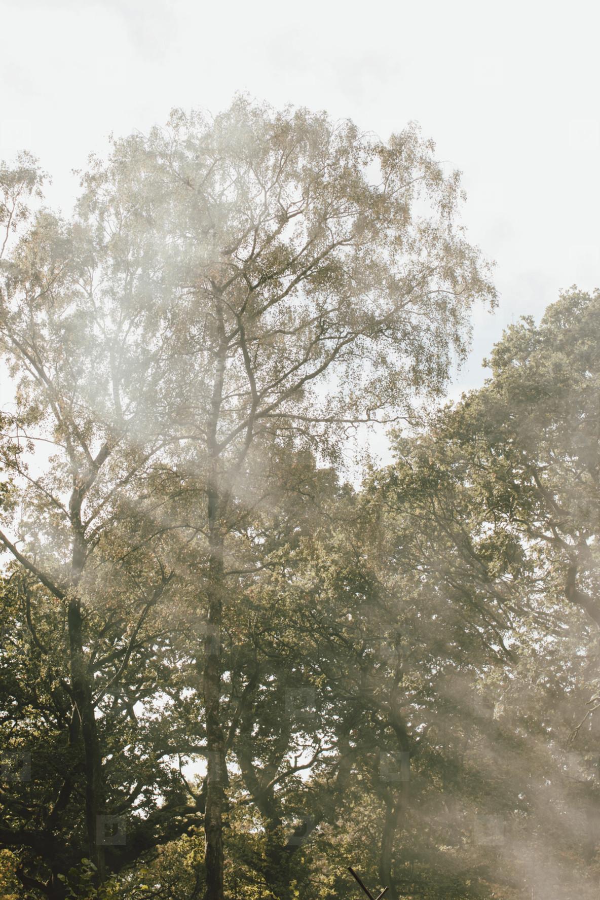 Sun shining through trees in woods