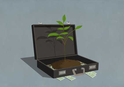 Money and growing sapling inside business briefcase
