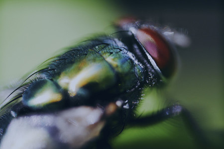 Extreme close up fly