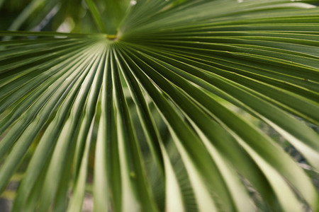 Close up green palm leaf pattern