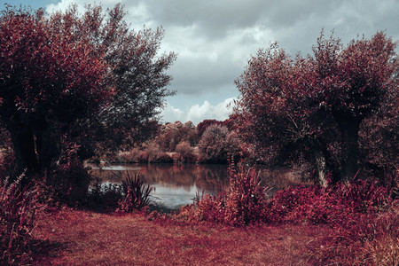 Sunny red trees surrounding pond Museum Germany