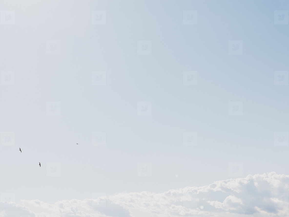 Birds flying above clouds in sunny tranquil blue sky