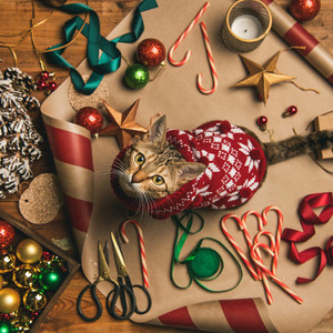 Flat lay of Christmas decorations and cat in sweater  square crop