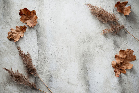 Thanksgiving or Halloween background with dried plants and fallen leaves Top view place for text