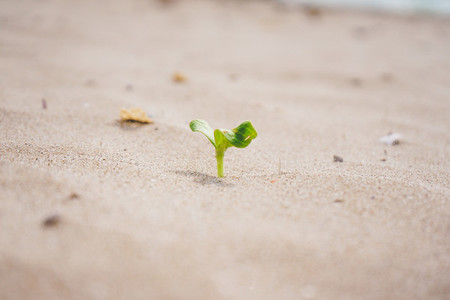 Little green sprout growing in the beach
