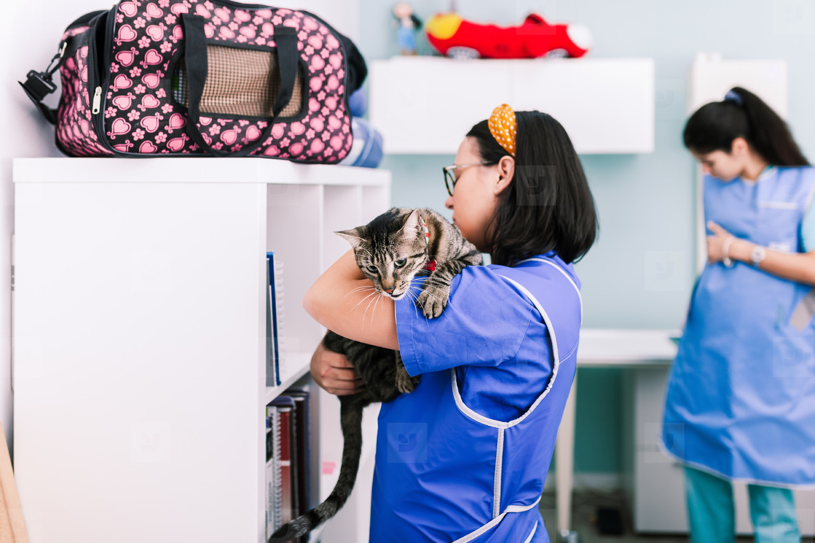 Vets with a cat in the x ray room