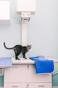 Cat over a xray machine in a veterinary clinic