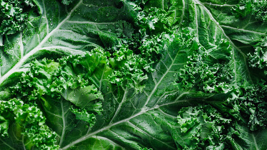 Top view of fresh curly kale salad  food background  macro photography