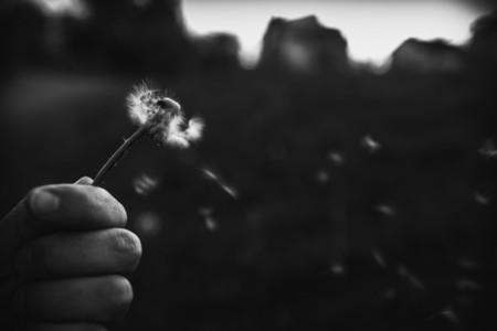 Black and White Dandelion 16