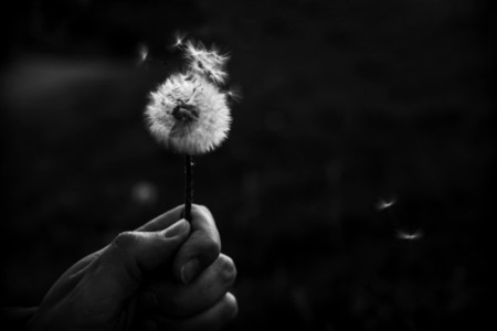 Black and White Dandelion 12