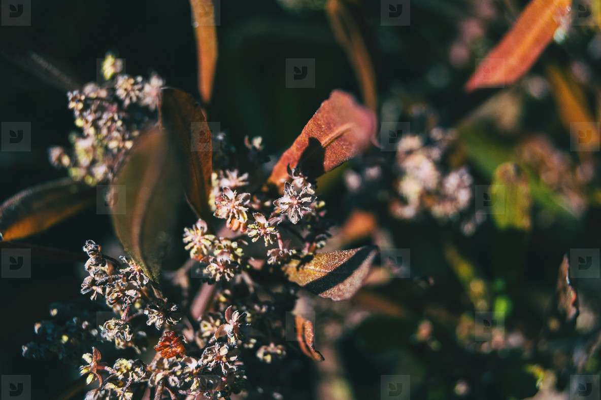 Close up of some small flowers and reddish leaves