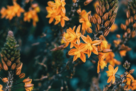 Close up of some yellow flowers hanging on a branch